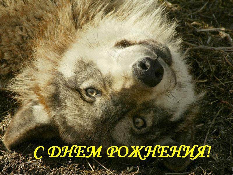 Re Волк.